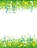 Achtergrond met het gras en de bloemen Royalty-vrije Stock Fotografie