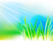 Achtergrond met het gras en de dalingen Stock Foto