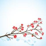 Achtergrond met het sring van boom Royalty-vrije Stock Foto's