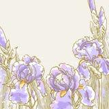 Achtergrond met irisbloemen Stock Afbeeldingen