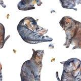 Achtergrond met katten en bijen Naadloos patroon waterverfillu Stock Afbeeldingen