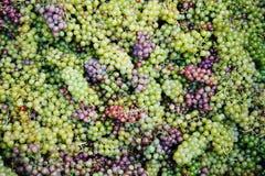 Achtergrond met druiven Stock Afbeeldingen