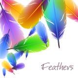 Achtergrond met kleurrijke veren Royalty-vrije Stock Afbeelding