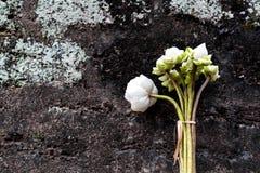 Achtergrond met lotusbloem Royalty-vrije Stock Afbeeldingen