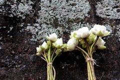Achtergrond met lotusbloem Royalty-vrije Stock Afbeelding