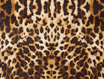 Achtergrond met luipaardtextuur Royalty-vrije Stock Afbeelding
