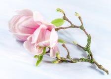 Achtergrond met magnoliabloemen royalty-vrije stock foto