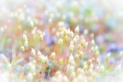 Achtergrond met mooi mos royalty-vrije stock afbeelding