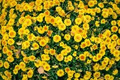 Achtergrond met mooie grappige gele bloemen Stock Afbeelding