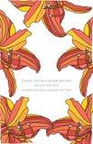 Achtergrond met oranje bloemenlelies Royalty-vrije Stock Foto