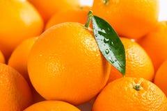 Achtergrond met oranje vruchten Sluit omhoog stock fotografie