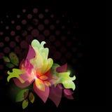 Kaart met bloemen. Mooie bloemenachtergrond. Royalty-vrije Stock Foto