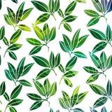 Achtergrond met palmbladen Stock Foto's
