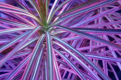 Achtergrond met purpere en roze bladeren royalty-vrije stock afbeelding