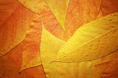 Achtergrond met rode en gele bladeren Royalty-vrije Stock Afbeeldingen