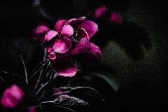 Achtergrond met roze bloem Royalty-vrije Stock Afbeelding