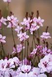 Achtergrond met Roze Bloemen Royalty-vrije Stock Foto's