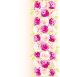 Achtergrond met rozen Stock Foto's