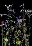 Achtergrond met tekeningskruiden en bloemen Stock Foto's
