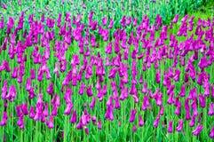 Achtergrond met tulpen Stock Foto's