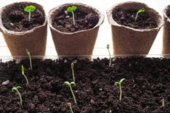 Achtergrond met turfpotten en de grond De lente het planten het werk stock foto's