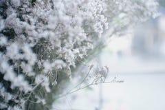 Achtergrond met uiterst kleine witte bloemen (gypsophilapaniculata) Royalty-vrije Stock Foto's