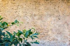 Achtergrond met uitstekende muur en unfocusinstallaties op eerste plan Royalty-vrije Stock Foto