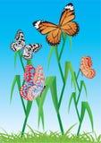 Achtergrond met vlinder. Vector. Stock Fotografie