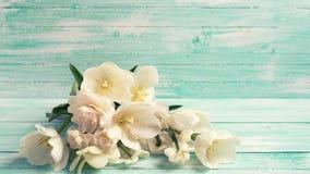 Achtergrond met witte gele narcissenbloemen royalty-vrije stock afbeelding