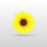 Achtergrond met zonnebloem Stock Fotografie