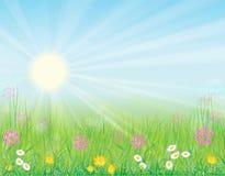 Achtergrond met zonnige weide Stock Fotografie