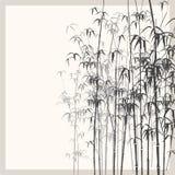 Achtergrond met zwart-wit bamboe. Stock Afbeelding