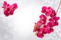 Achtergrond orchidee?n Bloemen Rode orchidee?n op een grijze achtergrond en bokeh stock foto