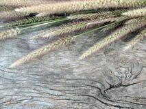 Achtergrond, oude houten achtergrond met gras Stock Fotografie