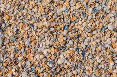 Achtergrond - shells Stock Foto's