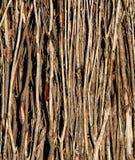 Achtergrond - Stokken binnen een Omheining van de Borstel Royalty-vrije Stock Foto's