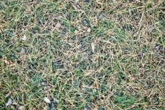 Achtergrond, textuur, gele pijnboomnaalden op groen gras, stock foto