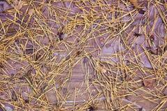Achtergrond, textuur, gele pijnboomnaalden op houten raad, stock foto's