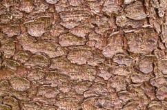 Achtergrond textuur van boomschors Vil de schors van een boom die het barsten vindt Stock Fotografie