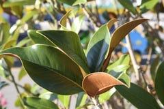 Achtergrond uit groene takken en bladeren wordt samengesteld dat stock foto