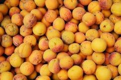 Achtergrond van abrikozen Royalty-vrije Stock Foto's