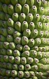 Achtergrond van banaan Stock Fotografie
