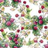 Achtergrond van bessen van raspberriWatercolorillustratie Royalty-vrije Stock Foto's