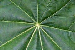 Achtergrond van bladeren Stock Foto