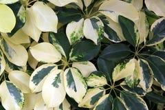 Achtergrond van bladeren Stock Afbeeldingen