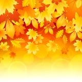 Achtergrond van bladeren Royalty-vrije Stock Afbeelding