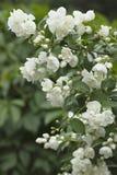 Achtergrond van bladeren en bloemen Royalty-vrije Stock Fotografie