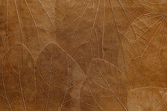 Achtergrond van bladeren van heldere bruine kleur Stock Afbeeldingen
