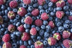 Achtergrond van blauw en rood voedsel Rijpe bosbessen en frambozen Stock Afbeeldingen