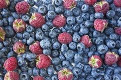 Achtergrond van blauw en rood voedsel Rijpe bosbessen en frambozen Dalend geïsoleerdn fruit Blauwe en rode bessen Diverse verse d Stock Afbeeldingen